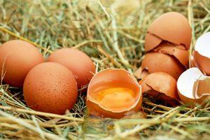 Økologiske æg