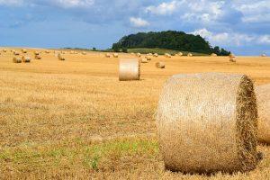 Hvad elsker du ved landbruget