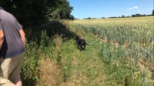 visionær landmand conservation agriculture