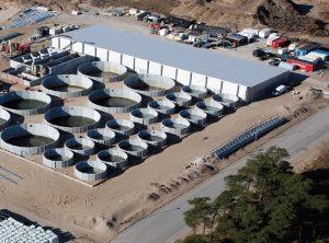 Danish Salmon facility Hirtshals Denmark opdrætsfisk