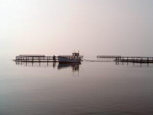 opdrætsfisk danmark akvakultur
