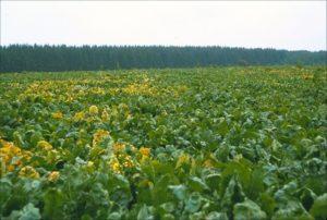 Pesticider har skabt mirakler