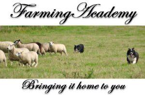 farming academy hunde