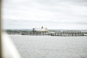dansk opdrætsørred havbrug